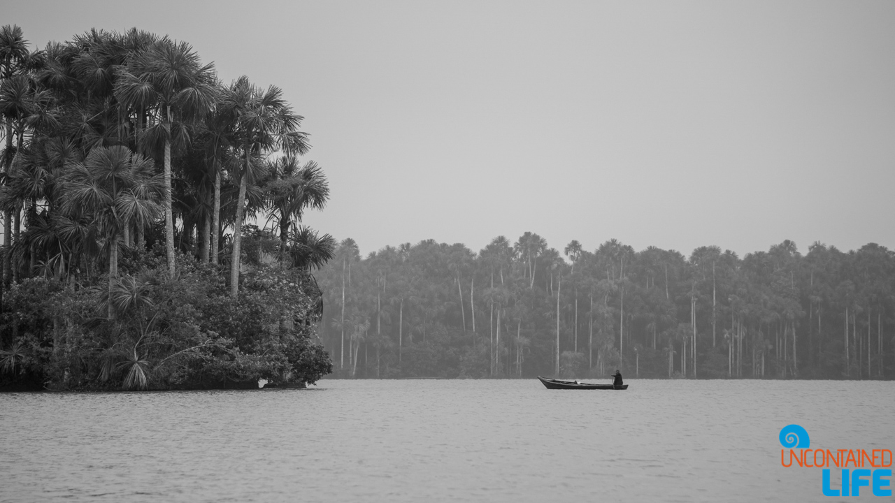Visit to the Peruvian Amazon, Puerto Maldonado, Peru, Uncontained Life