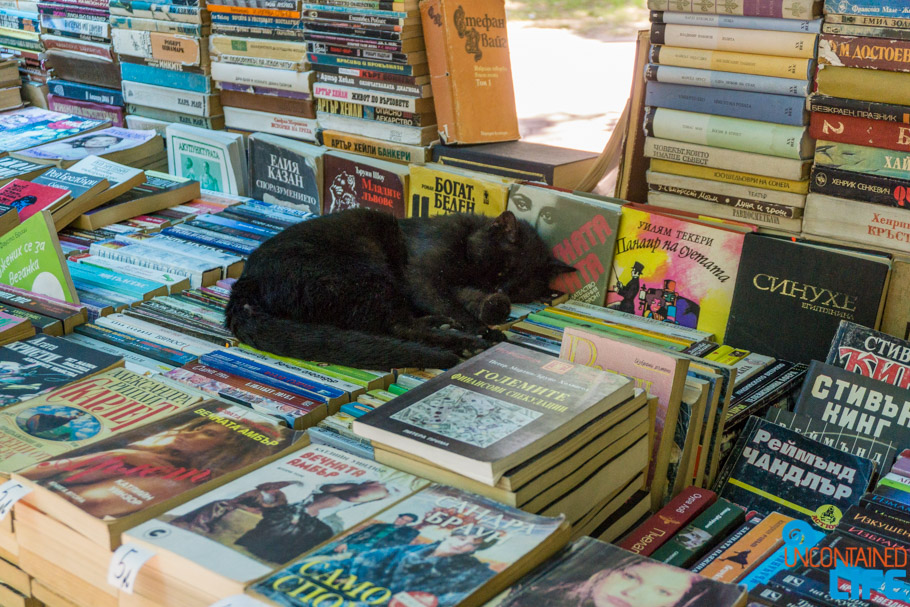 Cat, Used Books, Visit Varna, Bulgaria, Uncontained Life