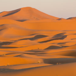 Visiting the Sahara Desert in Morocco, Uncontained Life