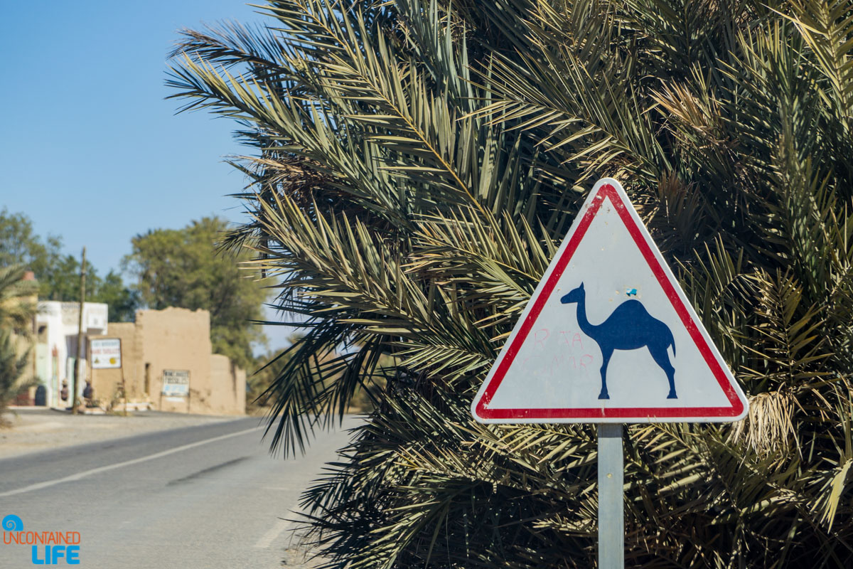 Renting a car in Morocco, Uncontained Life