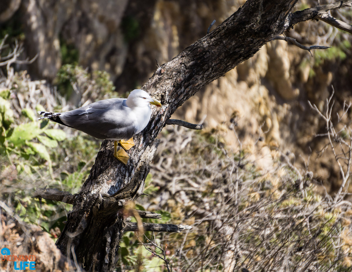 Seagull, Hiking in Costa Brava, Spain, Uncontained Life